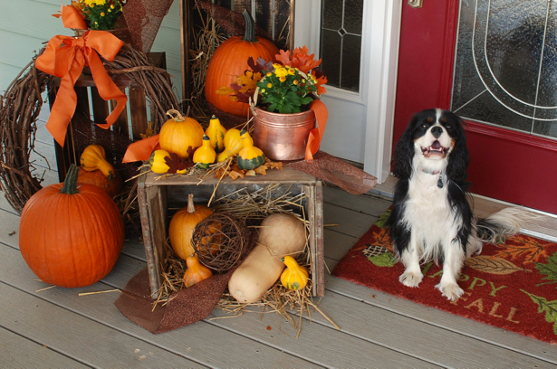 Farmhouse fall porch with Henry the cavalier king charles spaniel.