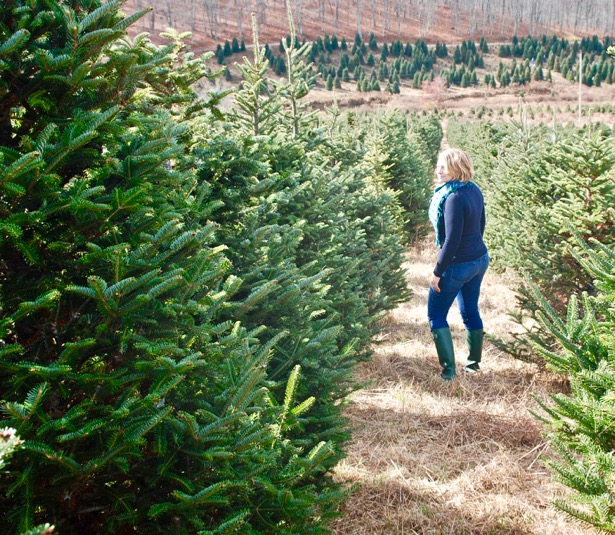 hunt-for-the-perfect-christmas-tree