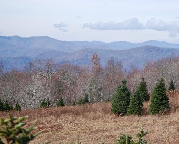 burrell-christmas-tree-farm