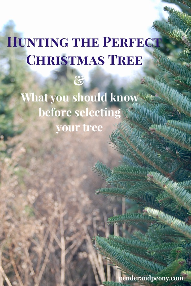 How to select the perfect Christmas tree for your home