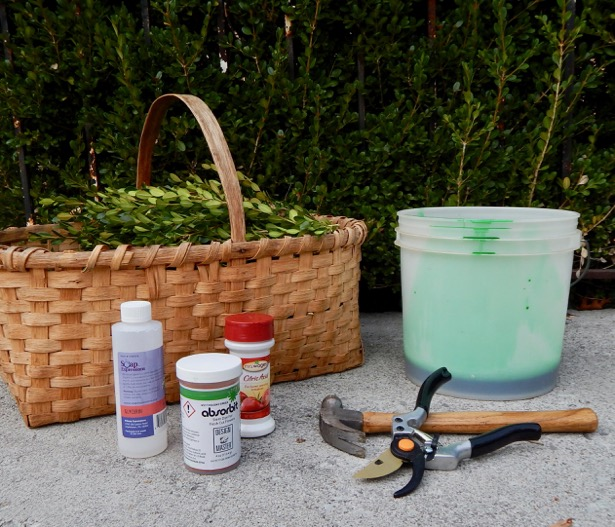 You will need glycerin, dye, citric acid, clippers, hammer, bucket, and boxwood cuttings to make preserved boxwood