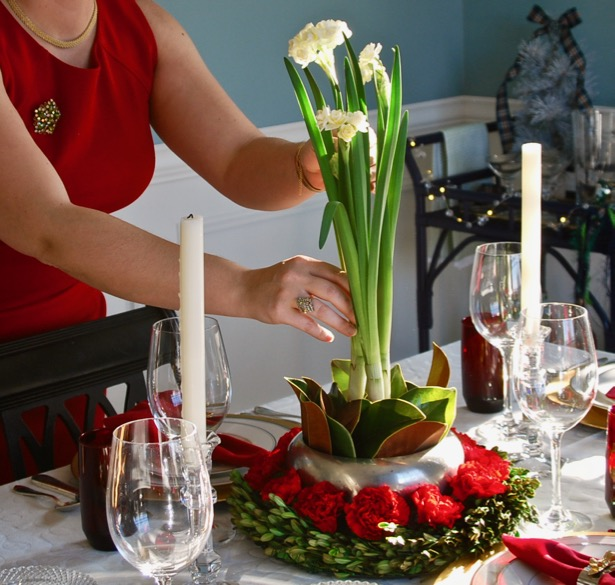 Set an elegant red and white Christmas table with paperwhite centerpiece, boxwood, and magnolia for Christmas dinner