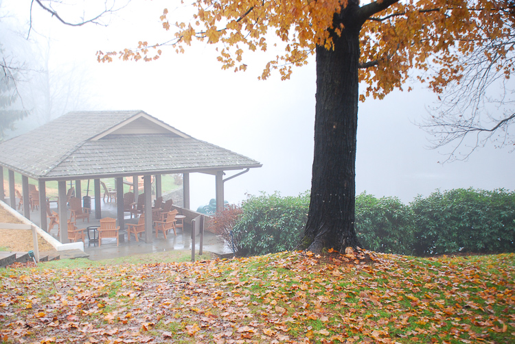 Fall scene with misty morning and golden hued tree in Blowing Rock, N.C. - autumn adventures