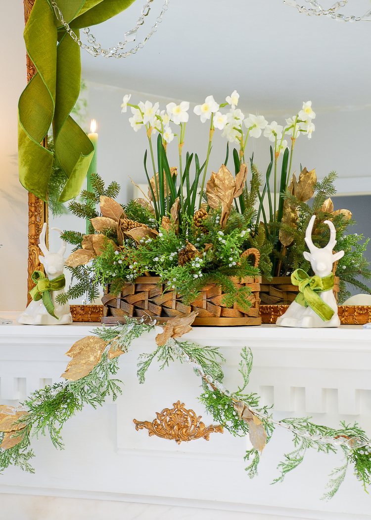 Poinsettia, juniper, paperwhites, velvet ribbon, and gold accents mingle merrily in my green and gold Christmas living room!