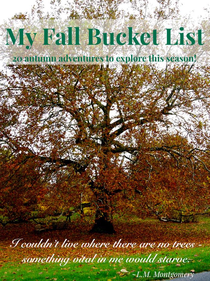 Autumn hued tree with text overlay - My Fall Bucket List: 20 autumn adventures to explore this season!