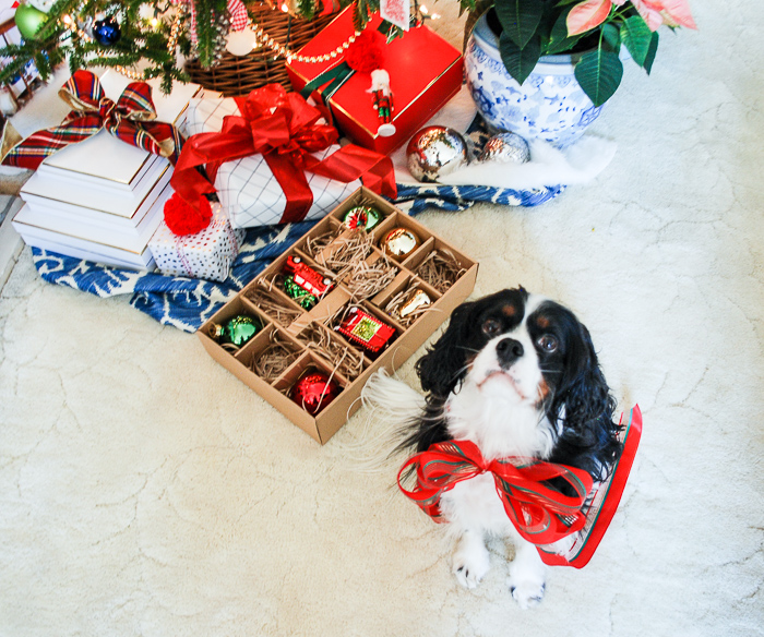 Henry the Cavalier King Charles Spaniel wears a red bow and sits in front of a preppy & plaid Christmas tree