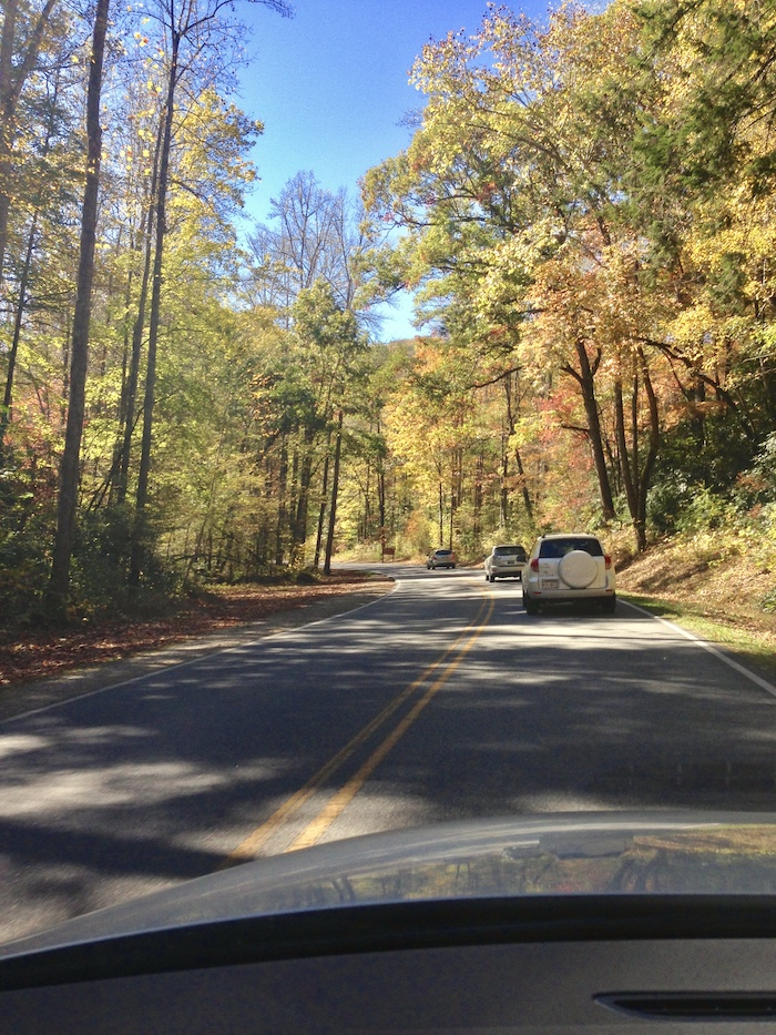 Driving through the Smokies to get to North Carolina amongst the pretty autumn leaves