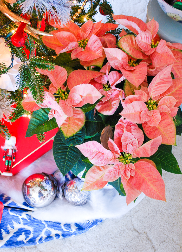 Cinnamon pink poinsettia in blue and white pot by preppy & plaid Christmas tree
