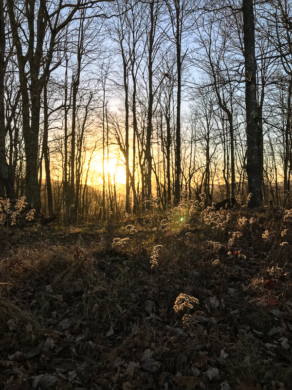 Sunset on the tree farm.