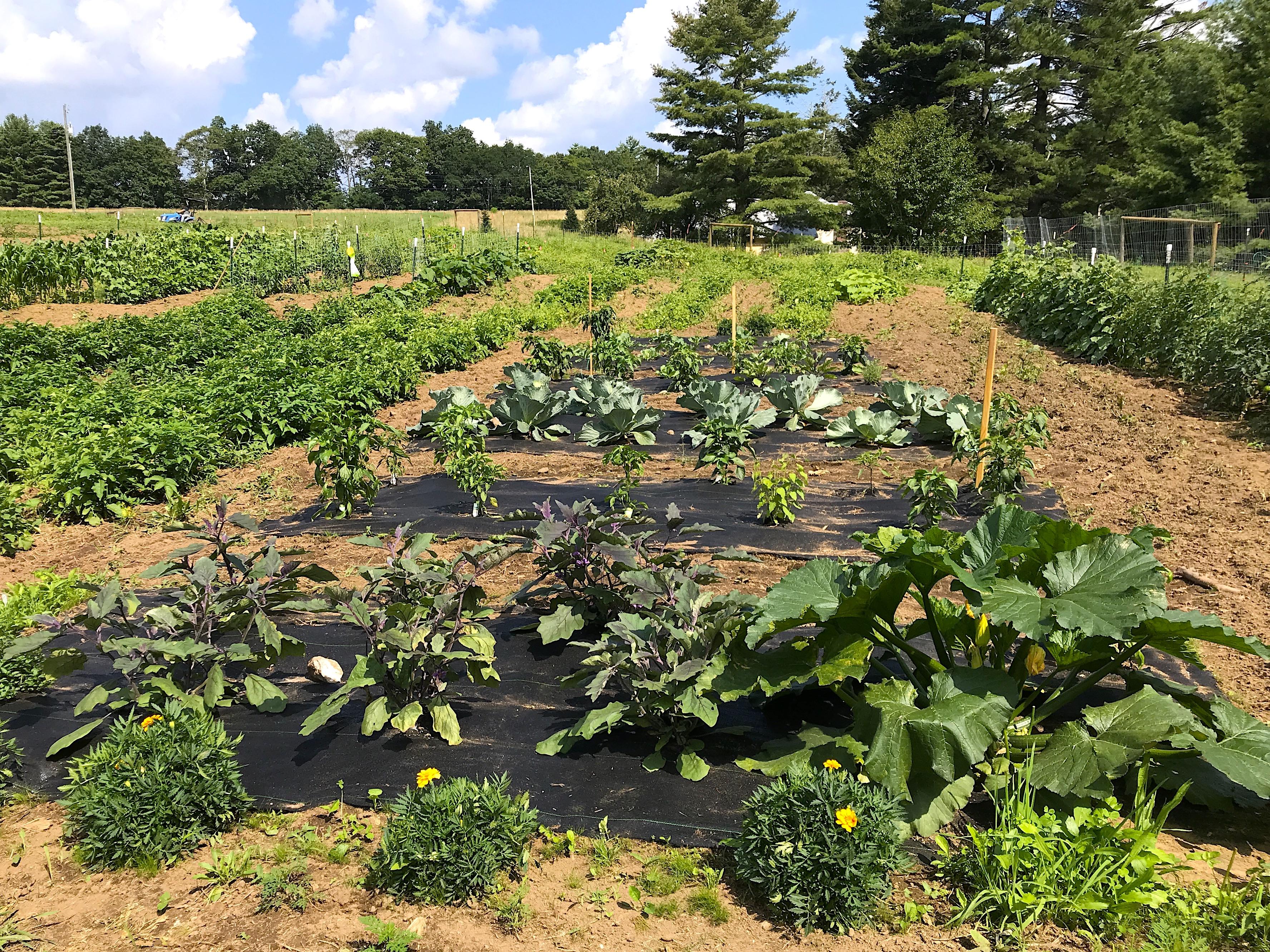Summer garden at Sycamore Hill Farm