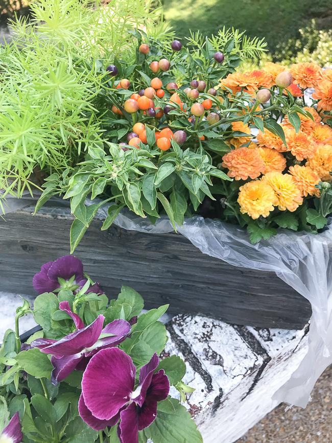 Arranging plants in fall dish garden
