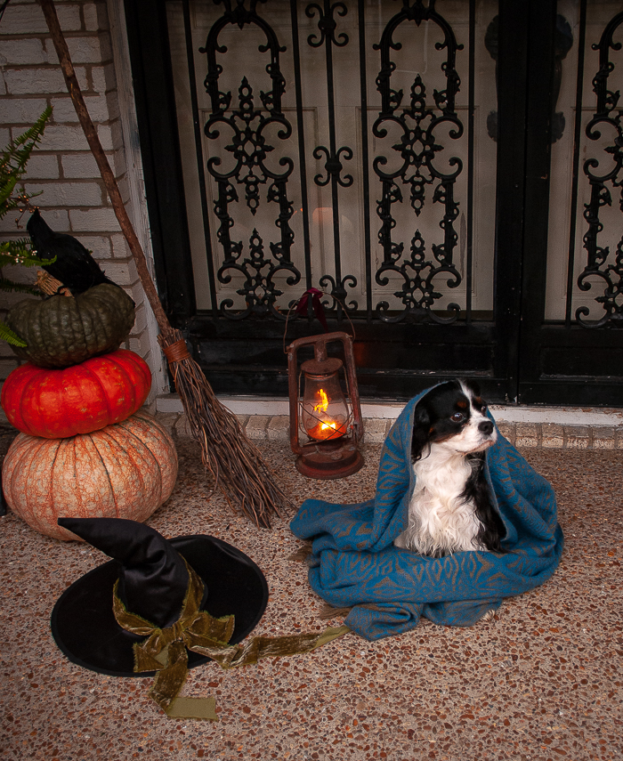 Henry wrapped in shawl sits at witchy front door waiting on the witch to come out!