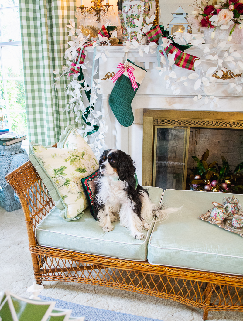 Henry my tricolored Cavalier King Charles Spaniel sits on my wicker daybed with green and chintz cushions