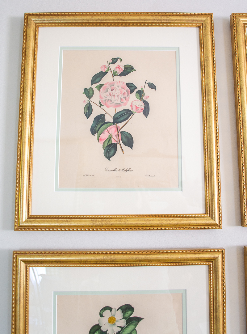 Pink camellia engraving in gold frame hung on my floral gallery wall in living room
