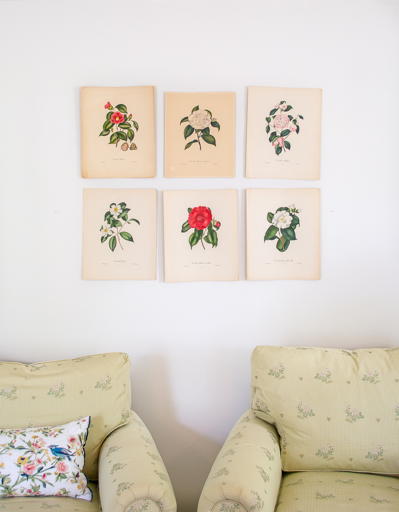Prints taped up on wall in grid -Planning the arrangement of my camellia engravings on the living room wall